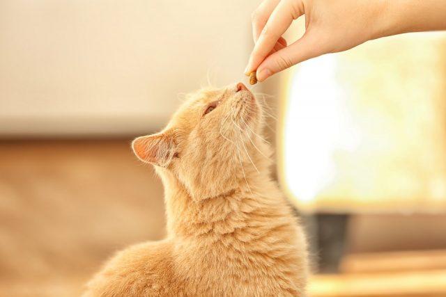 choisir vos croquettes chat